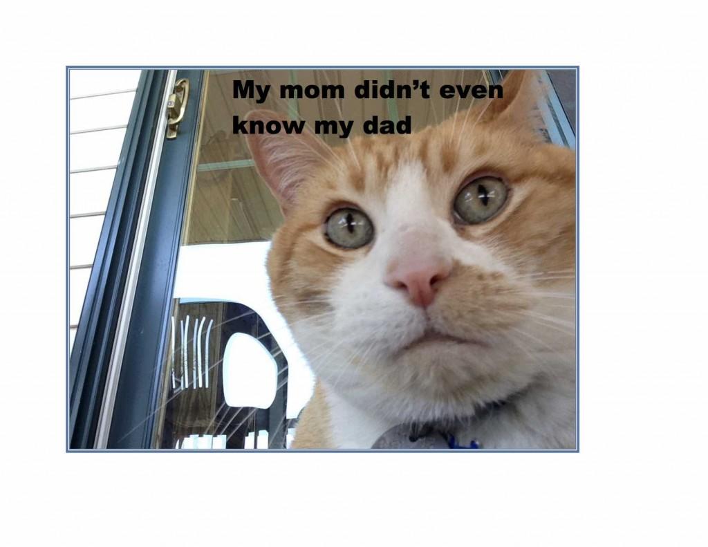 Cat Bastard