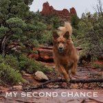 Linked Local Network - Greg Markelz - Community Voice - Animal Rescue