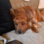 John Wick, rescue dogs