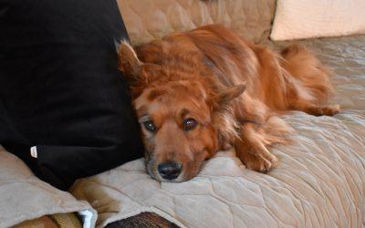 Rescue dog stars in John Wick movies