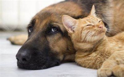 Furry Friends for a Longer Life