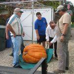 Giant Pumpkin Contest